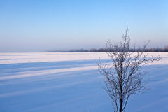Old bush without leaves along a frozen lake Royalty Free Stock Image