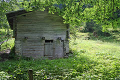 Old cabin in meadow with trees Royalty Free Stock Photos