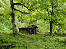 The old cabin in the woods. Old cabin wood forest grass green moss summer tree chestnut abandoned deserted houseneglected desolate forlorn godforsaken silence stock photo
