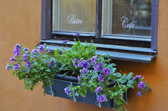 Old cafe window with flower box, on a orange stucc. An old cafe window on a rustic orange stucco facade, plus a window flower box filled with purple flower Stock Photos