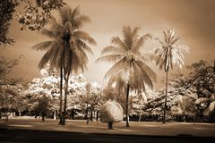 Old Cambodia - palm in park Royalty Free Stock Photo