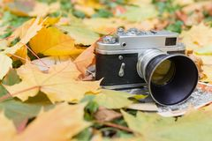 Old camera and old photos on autumn leaves close up stock images