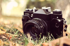 Old camera in a park in autumn Royalty Free Stock Image