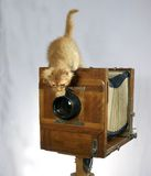 Old camera and red kitten Royalty Free Stock Image