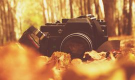 The old camera in the woods Royalty Free Stock Photo