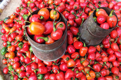 Old Can and Tamarillo tomatoes. Old can and many tiny strange tomatoes or Tamarillo in the market in Nepal. They have different colors Stock Photography
