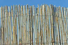 Old cane fence texture Royalty Free Stock Photography