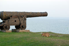 Old cannons with rabbit in Kalmar castle Royalty Free Stock Photography