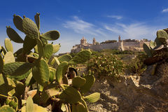 The old capital of Mdina in Malta. As viewed from the country side surrounded with cactus Stock Photos