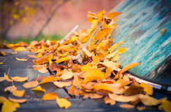 Old car covered with fallen leafs Stock Image