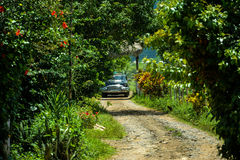 Old car in the field of Vinales, Cuba. Great car in the middle of the nature stock images