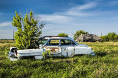 Old Car with Plant in the Hood Stock Image