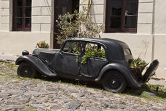 Old car with plants