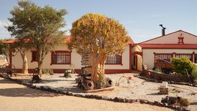 Old Car ruins at the Canyon Roadhouse in Namibia. Trees growing in the car wreck royalty free stock images