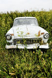 Old car. Rusted car Volga in the weeds Stock Images