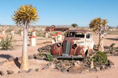 Old car in a succulent garden between flowering quiver trees Royalty Free Stock Images