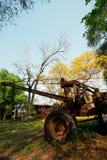 Old car under Trunk Golden Tree. In garden Stock Photography