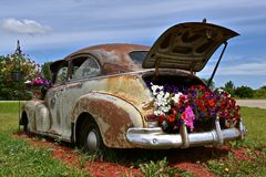 Old car used for display flowers Stock Photos