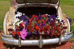 Old car used for display flowers. An old car with an open trunk serves as a way of advertising with a display of colorful flowers Stock Image
