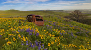 Old Car among Wild Flowers Stock Photo