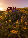 Old Car among Wild Flowers at Sunset Stock Photo