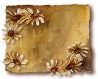 Old card with daisies. Watercolor brown ancient card with white daisies on white background stock illustration