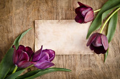 The old card and fresh tulips Royalty Free Stock Images
