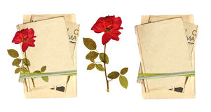 Old cards and dried rose Stock Image