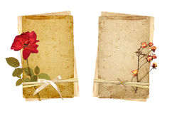 Old cards and dried rose Royalty Free Stock Photo
