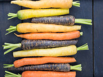 Old  carrot varieties Royalty Free Stock Photos