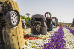 Old cars in the flower beds in Dubai Miracle Garden. Old cars in the flower beds in the park in Dubai Miracle Garden Stock Images