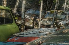 old cars and trees at the junkyard stock images