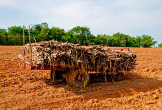 The Old cart with sugar cane Royalty Free Stock Photo