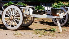 Old carts used to grow plants royalty free stock photography