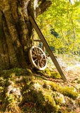 Old cartwheel leaning on tree stock images
