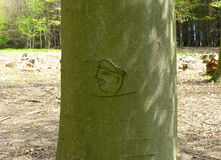 Old carving in the tree. Photo of an old carving in the tree stock image