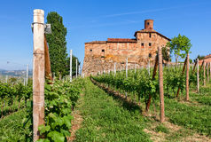 Old castle and green vineyards in Italy. Stock Images