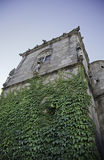 Old castle in Portugal. Detail of a ruin with plants Stock Images