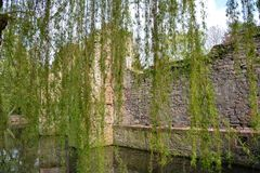 Old castle ruins on the river. With weeping willow royalty free stock photography