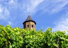 Old castle in vineyard Royalty Free Stock Photo