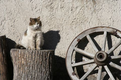 Old cat. Old alley cat Stock Photo