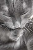Old cat Stock Images
