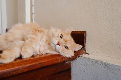 Old cat is looking something before he going to sleep in the evening. Old and orange cat is looking something before he going to sleep in the evening stock photos