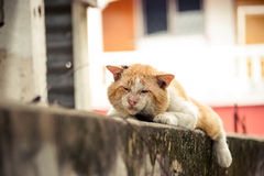 Old cat. Old male cat with a big face on concrete wall / Big old tomcat. Local Tomcat Royalty Free Stock Photography