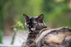 Old cat with nature place Royalty Free Stock Photography