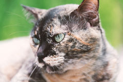 Old cat with nature place Stock Photography