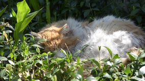 Old cat sleeping in the grass stock video