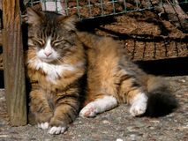 Old cat sunbathing. An old tabby sunbathing under a garden benchn Stock Image