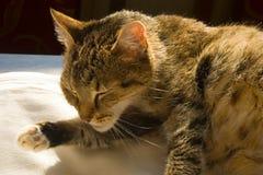 Old cat Stock Photos
