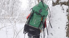 Old caucasian man makes his way with Hiking Sticks through thickets in a dense snowy forest. Thick dense thicket of. Trees and roots in in the snow-covered stock video footage